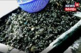 VIDEO-കർഷകർക്കു പ്രതീക്ഷയേകി കല്ലുമ്മക്കായ വിത്ത്