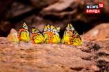 VIDEO:വിസ്മയമായി വിലാസിനി ശലഭം
