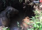 VIDEO: കുട്ടിക്കൊമ്പന്റെ ന്യൂ ഇയർ പൊട്ടക്കിണറ്റിലാകുമോ?