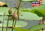 VIDEO: താമര കർഷകർക്ക് ആശ്വാസമായി വായ്പാ പദ്ധതി