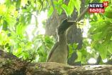 കൂടു കൂട്ടുന്ന വേഴാമ്പൽ: കാഴ്ച ഡല്ഹിയിൽ നിന്ന്