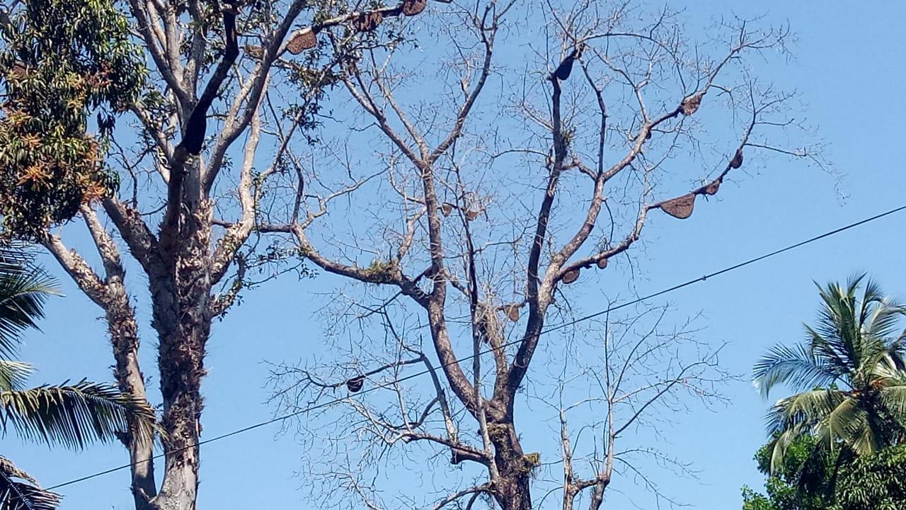 ഒരു മാസത്തിനിടെ ഇത് മൂന്നാമത്തെയാളാണ് തേനീച്ചയുടെ കുത്തേറ്റ് മരിക്കുന്നത്
